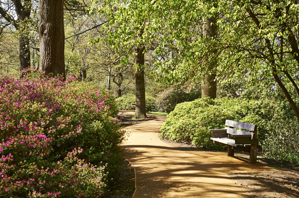 Isabella Plantation | Courtesy - The Royal Parks