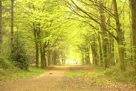 Europe's Most Enchanting Forests