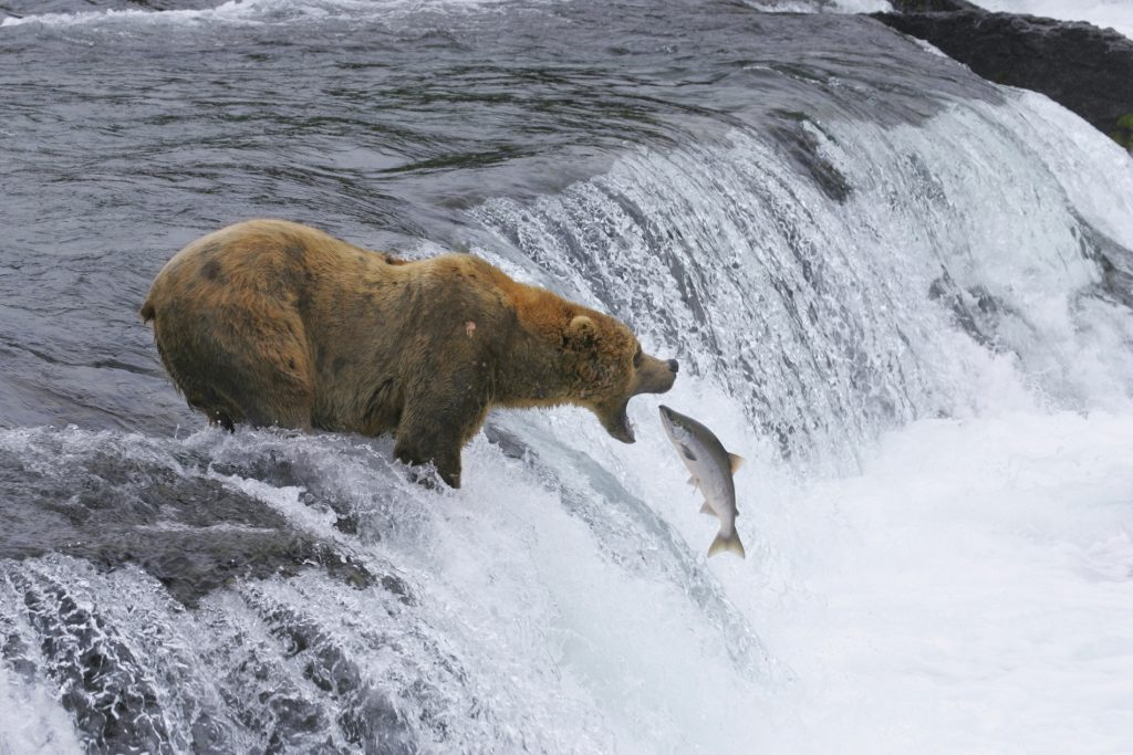 America's Most Beautiful National Parks | Part II | Katmai National Park | www.VisitTheUSA.co.uk