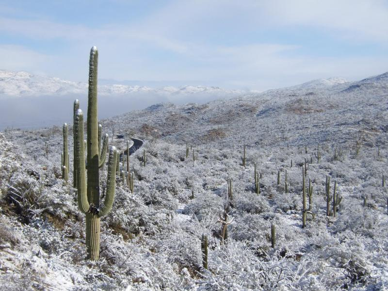America's Most Beautiful National Parks | Part II | Saguaro National Park | NPS.gov