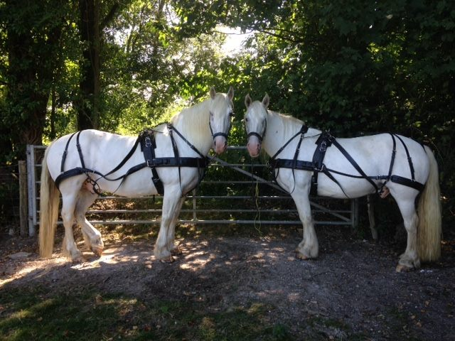 A Most Romantic Interlude Aboard A Horse Drawn Carriage | The Horse Drawn Carriage Company
