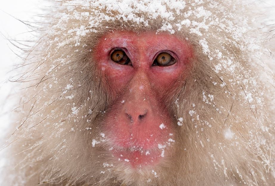 Guide To The World's Best Wildlife Holidays | Part I | Japanese Winter Wildlife Photo Expedition