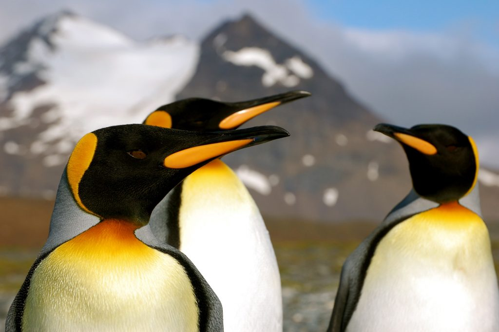 Guide To The World's Best Wildlife Holidays | Part I | South Georgia and Antarctic Peninsula: Penguin Safari | Photographer Dave Ellis