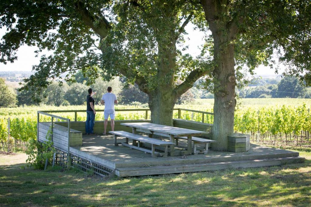 Top 5 English Vineyard Tours | Gusbourne Estate, Kent | Best of England