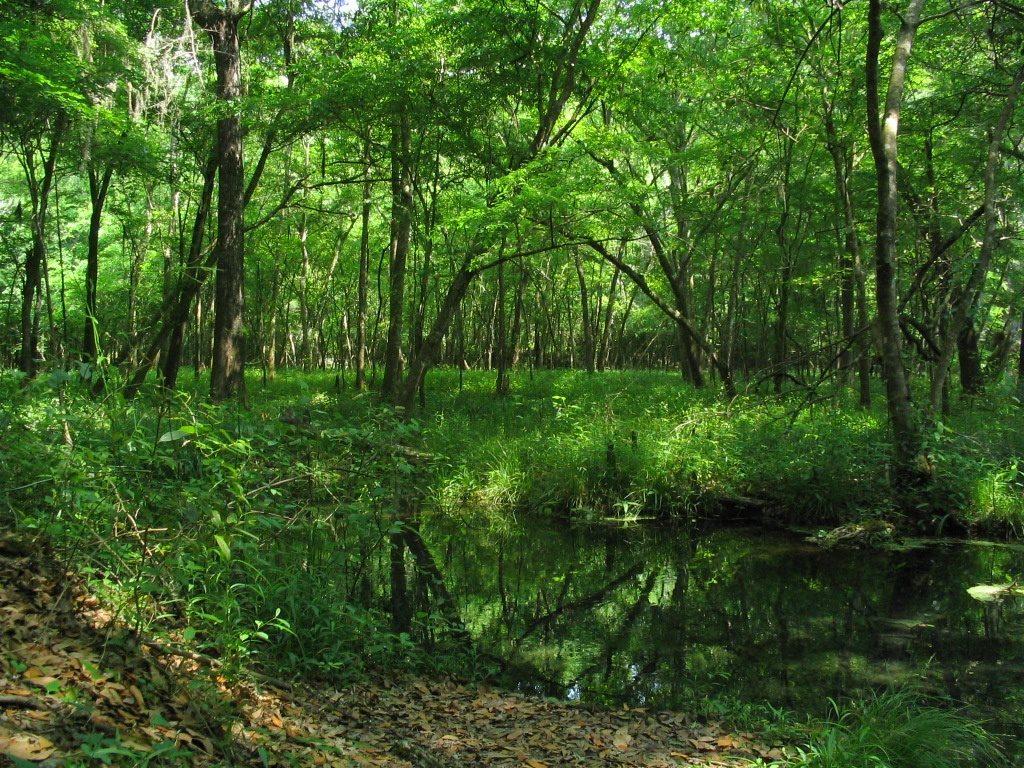 Ichetucknee Springs State Park Frest | Credit: User: Moni3