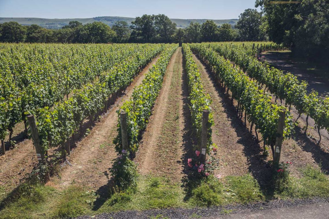 Top 5 English Vineyard Tours | Ridgeview Vineyard, Sussex | Best of England