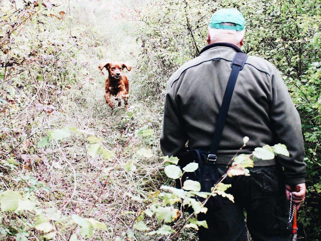 Truffle Hunting - Zigante