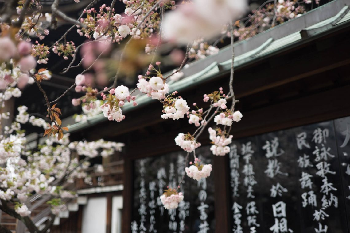 Top 10 Local Things To Do In Tokyo | Tokyo Cherry Blossoms