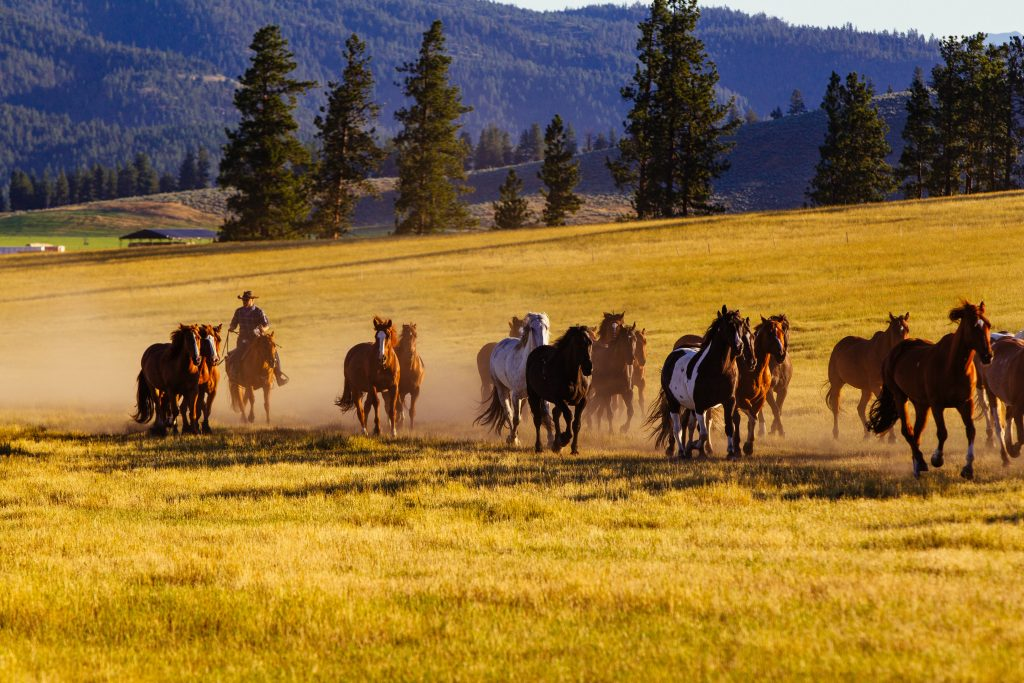 The Finest USA Ranch Stays | The Resort at Paws Up – Montana