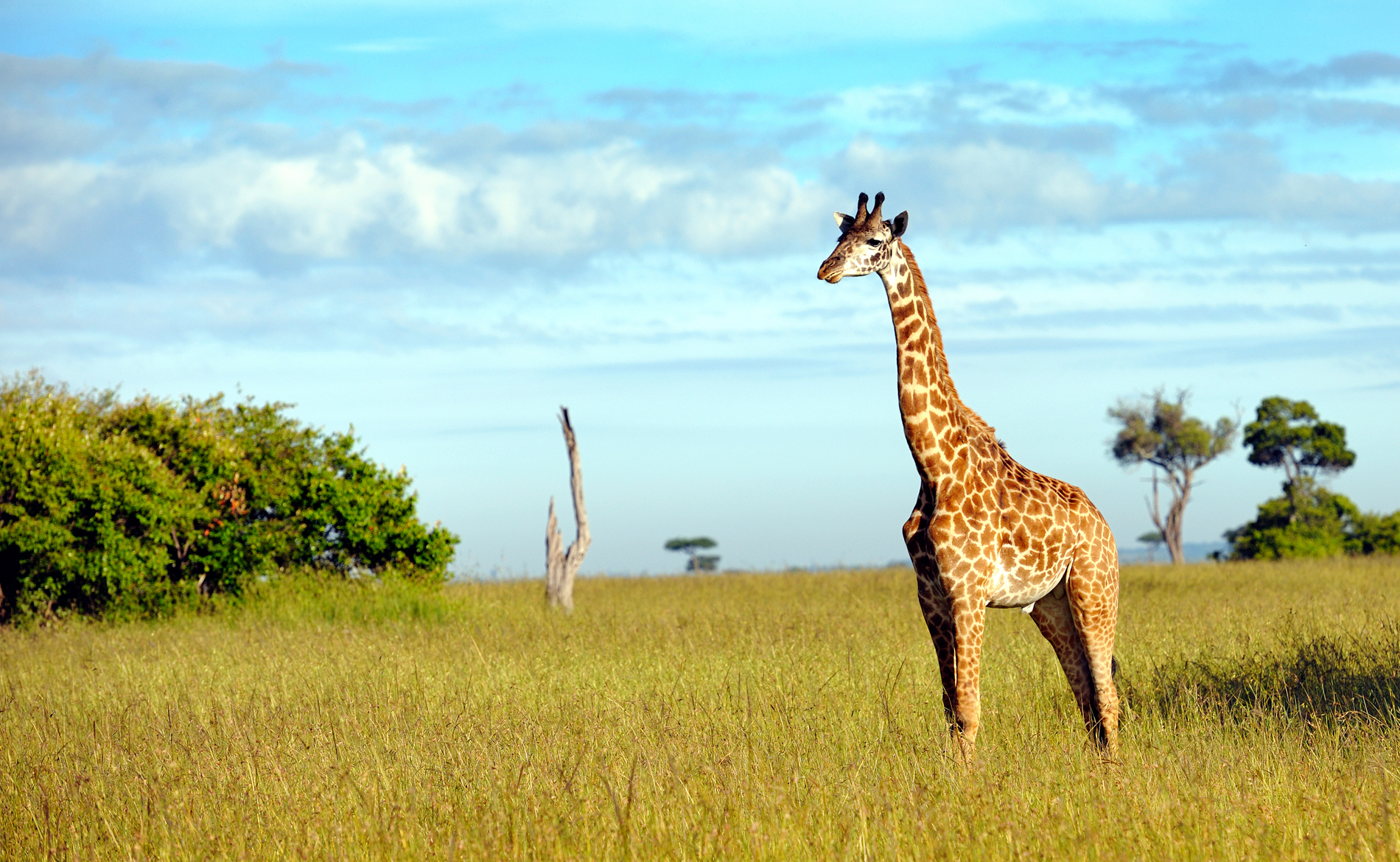 9 Great Reasons To Visit Kenya This Year |