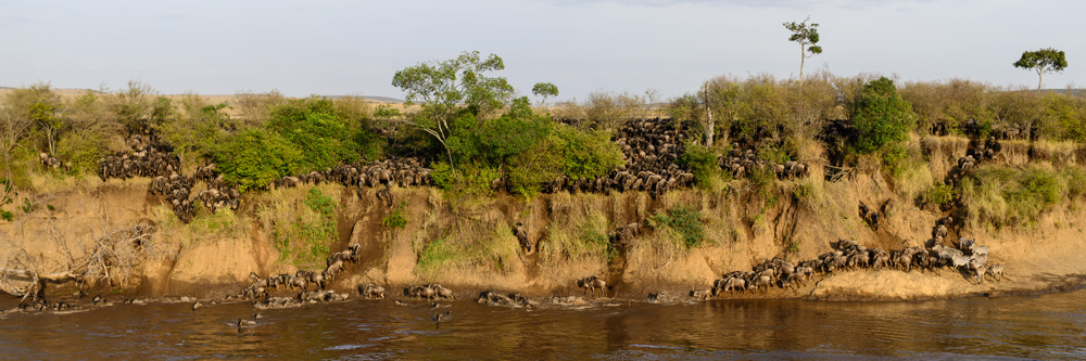 9 Great Reasons To Visit Kenya This Year | wildebeest migration ®davidlloyd.net