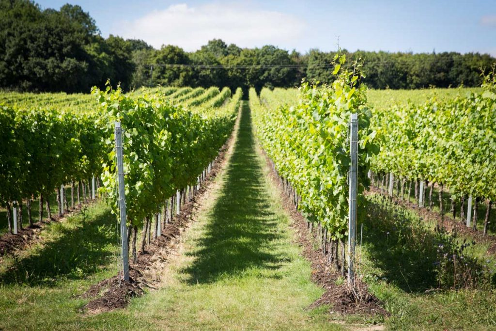 Best of England Vineyard Tours | Gusbourne Vineyard