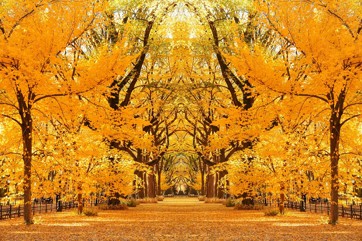 Central-Park-in-Autumn_-New-York-City_39811.jpg